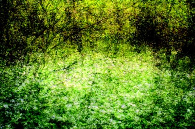 Ian Brown Frenchman's Creek, Wild Ransom 'E' type/aluminium 67x101cm